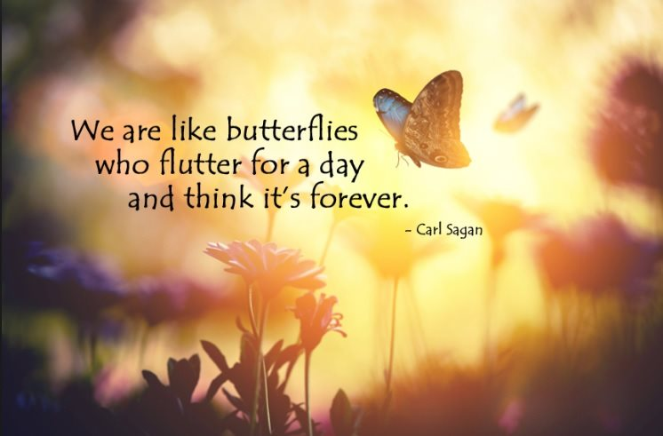 We ar elike butterflies